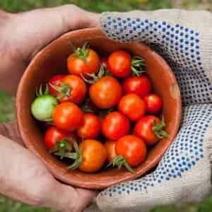 Dieta mediterrana... la dieta sana!