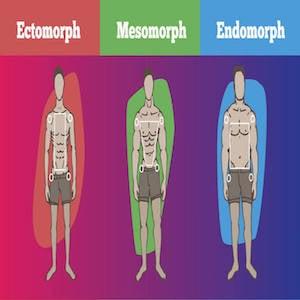 Somatotipo: sei ectomorfo, mesomorfo o endomorfo?